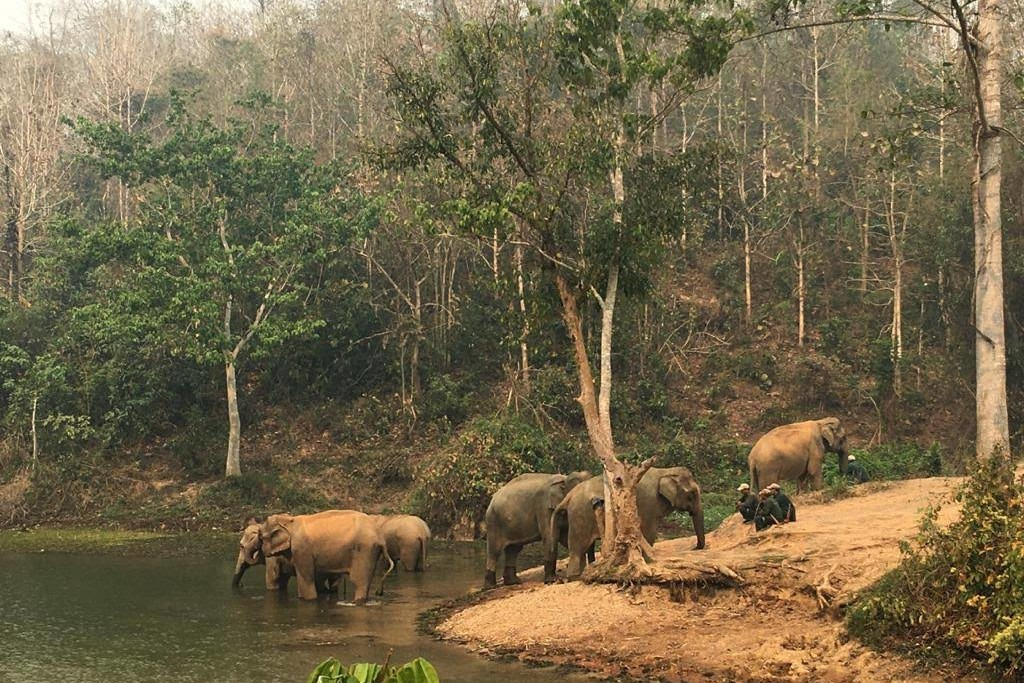 Elephants in Vietnam